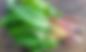 Screen Shot 2018-11-01 at 1.39.37 PM.png