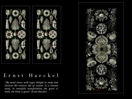 STYLING MAGAZINE salutes Ernst Haeckel, German biologist, naturalist, philosopher and artist extraor