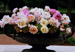 Styling Roses - Southern Highlands