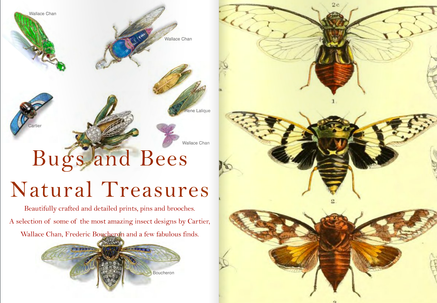 Natural Treasures - Bugs & Bees