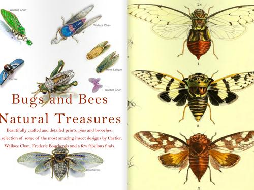 Natural Treasures - Bugs & Bees