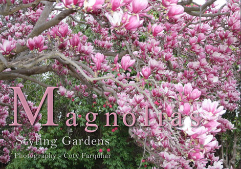 MAGNOLIA TREES - STYLING GARDENS