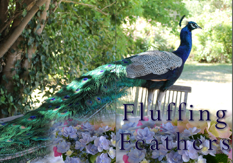 STYLING WEDDINGS - SUMMERLEES, SUTTON FOREST - FLUFFING FEATHERS