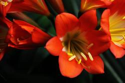 OrangeFlower.jpg