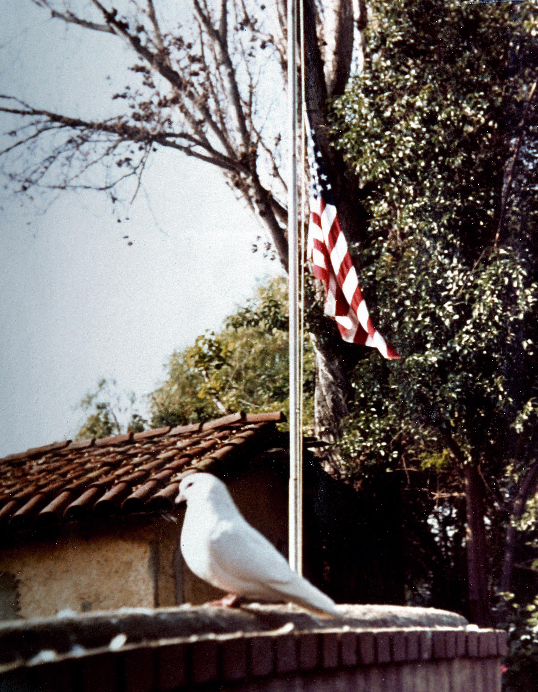 jfkbirdflag.jpg