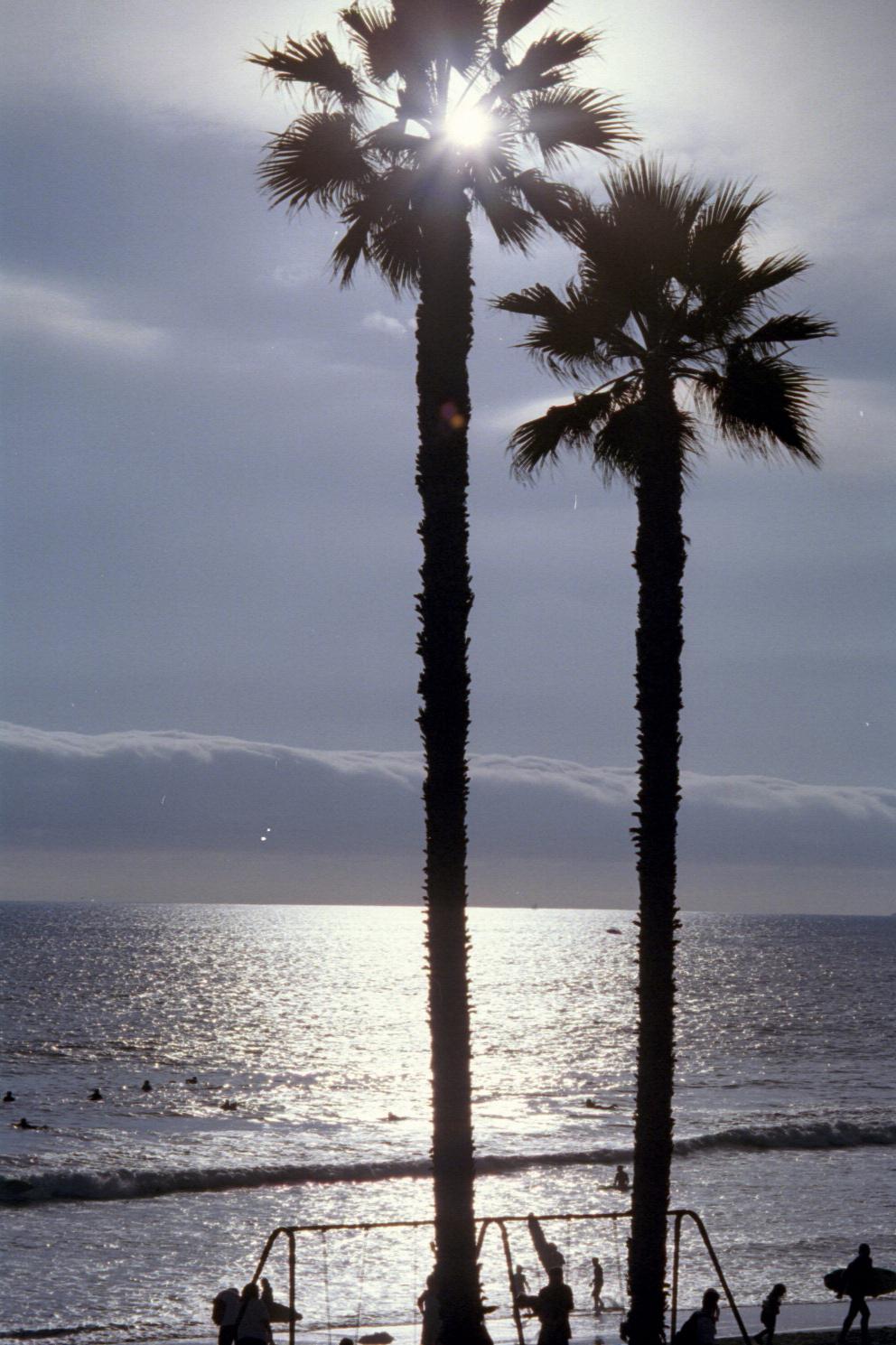 SunPalm.jpg