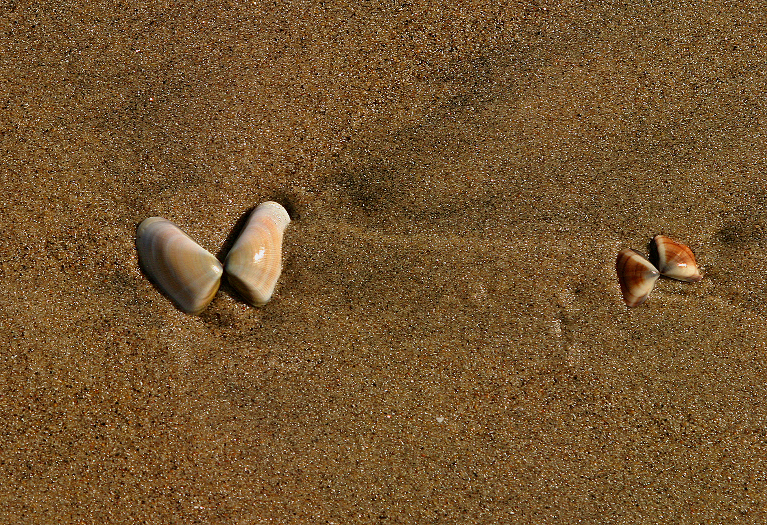 shellsbutter.jpg