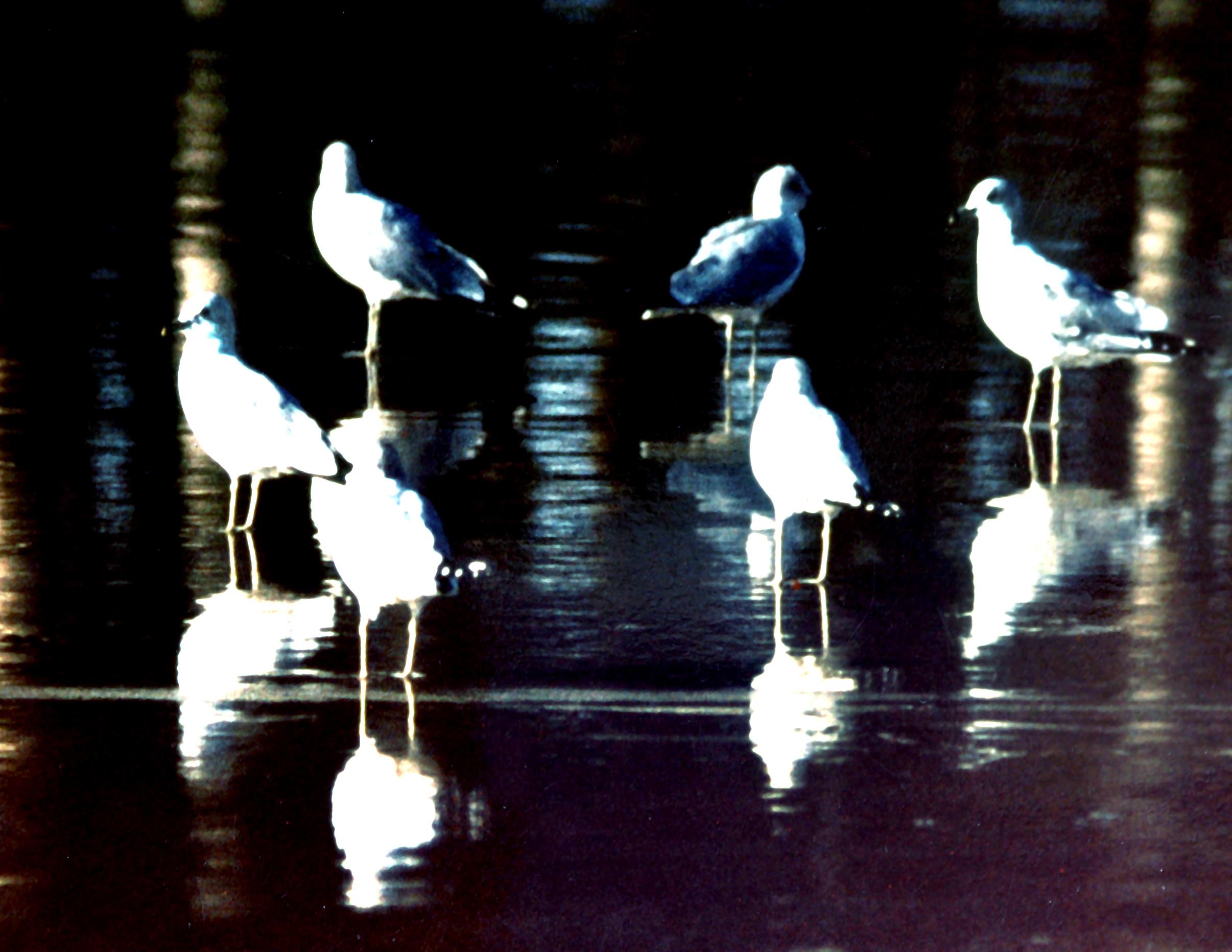 birdsonbeach.jpg