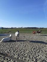 chevaux la joux.jpg