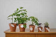 Con motivo del día mundial del árbol se repartirán plantas en el mercado de Villanueva de la Serena