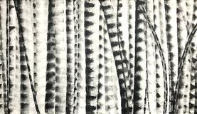 Bamboo Series 12