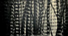 Bamboo Series 13