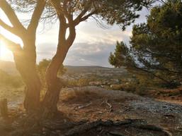 Le soir au sud de la France, Montolieu