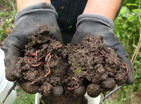 Introduccion al Vermicompostaje; el compostaje con lombrices.