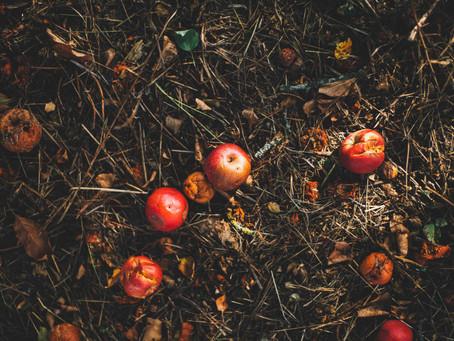 5 consejos para evitar desperdiciar los alimentos
