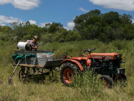 ¿Cómo alimentar a tu granja de lombrices? Compostaje fácil y eficáz para reducir tu basura.
