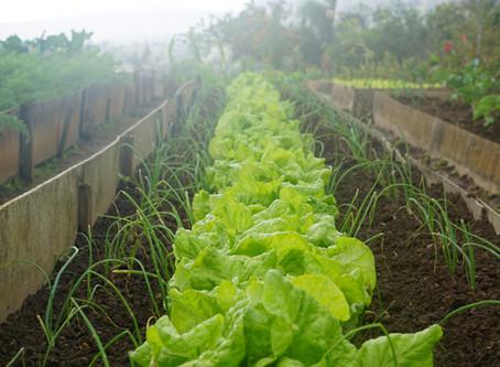 Pesticidas y repelentes naturales que podes hacer vos mismo