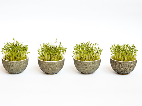 Sprouts: The Simplest Superfood to Grow in your Kitchen
