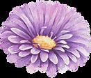 Purple%20Flower%20_edited.png