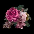 Beautiful hand drawn pink roses transpar