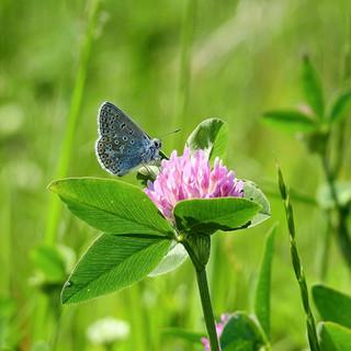 butterfly-4246855_1280.jpg