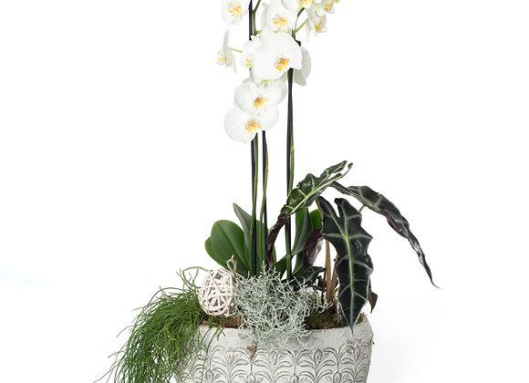 Композиция в кашпо с орхидеей