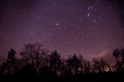 Trees in the Milky Way