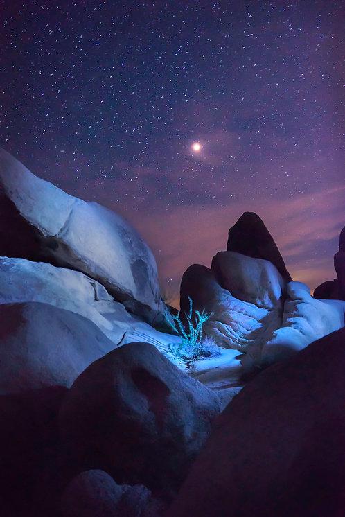 A Midsummer Night's Dream - Joshua Tree, California