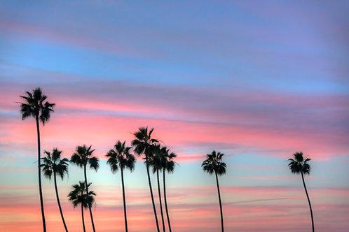 Cali Grown - La Jolla, California