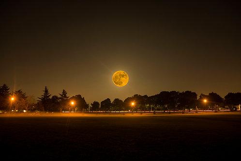 Beaver Moon - Bay Area, California