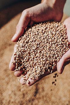 fkn-barley.jpg