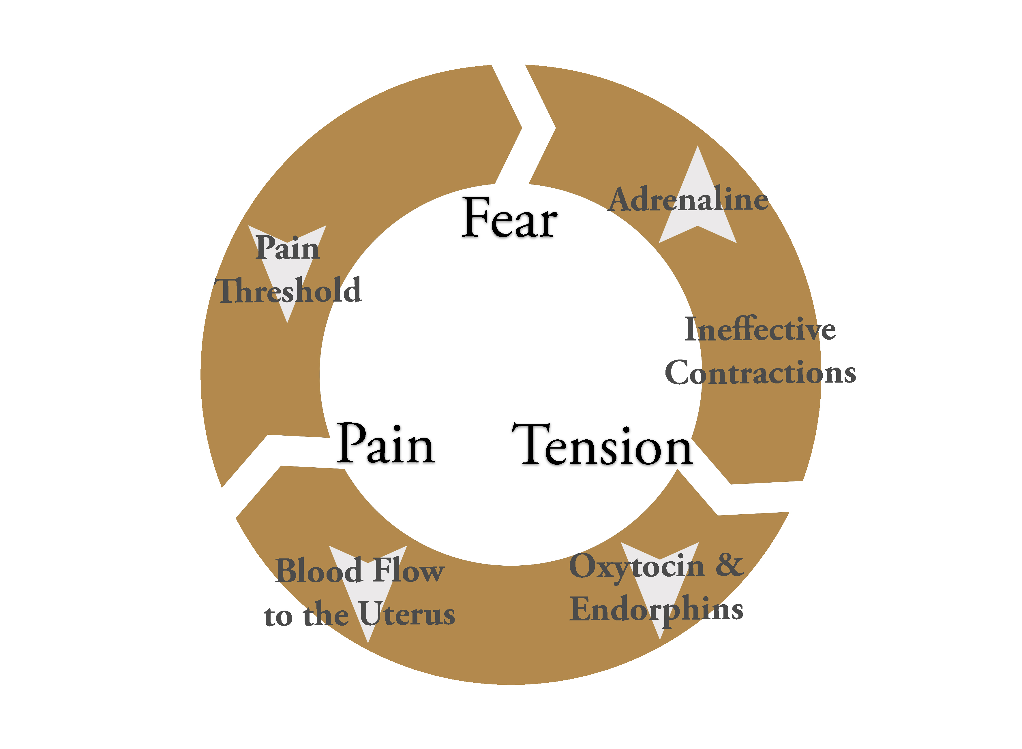 Pain Cycle.jpg