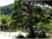 kiyoto2.jpg