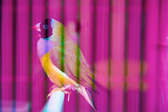Bird and Flower Market, Bird, 2018/2021