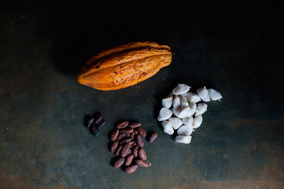 Cabruca Cocoa Brazil