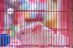 Bird and Flower Market, White Rabbit, 2018/2021