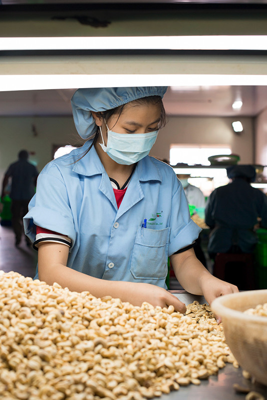 Cashew in Vietnam for ResponsAbility