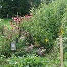 jardin_été_2014_10.JPG