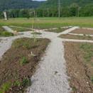 plantation_juin1.JPG
