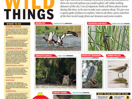 Article published in the Times of India on Lens N Wings Birding