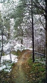 mountain bike versailles state park