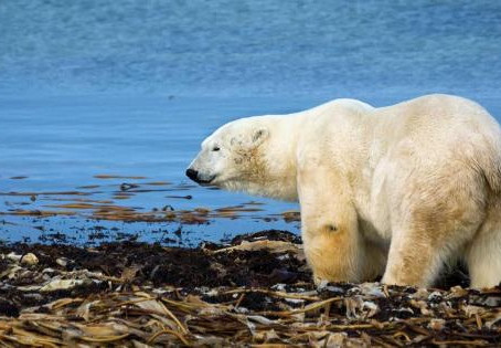 Not one dollar: One-third of voters unwilling to spend anything to counter climate change