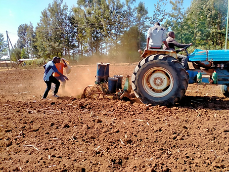 Maize planting.png