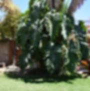 Casa Gobernador Ajijic garden