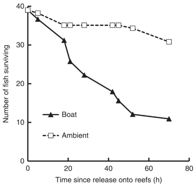 [Survival of damselfish (P. ambionensis) released onto reefs with ambient or boat-noise playbacks (From: Simpson et al. 2016)]