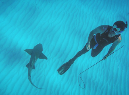 'My Sharklab Experience,' by former intern Andrew Haring