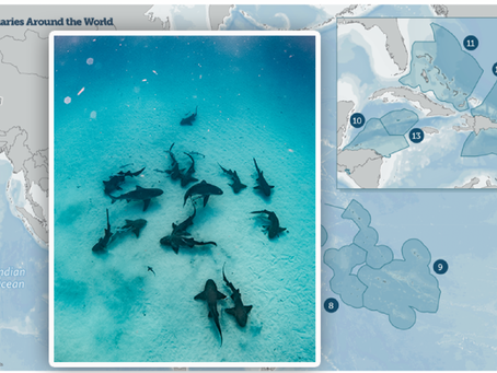 WHAT ARE SHARK SANCTUARIES? - By PI Clemency White