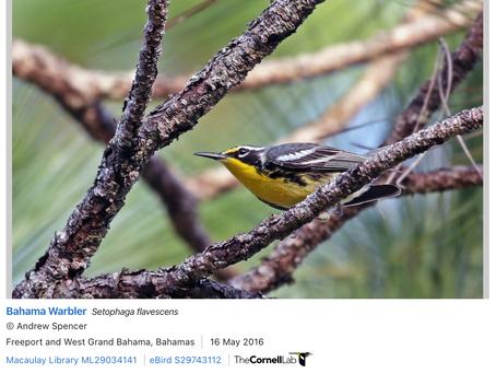 Birds Of Bimini by Intern Cameron Smith