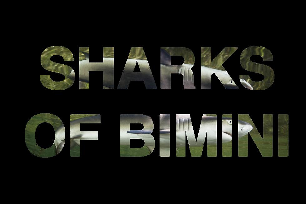 SHARKSOFBIMINI.png
