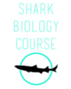 shark biology course.jpg